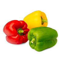 Dutch Mix Colour Capsicum 500g*