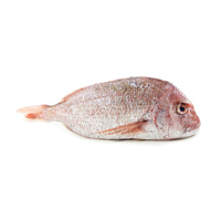 NZ Snapper (Gilled and Gutted)