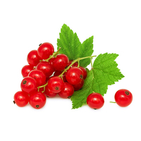 Dutch Red Currants 125g*