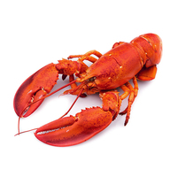 FZ Whole Cooked Lobster 300g - Canada*