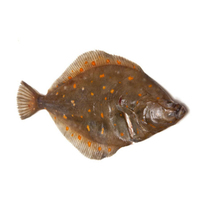 French Wild Plaice Whole G&G