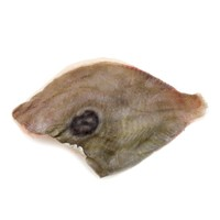 Frozen NZ John Dory Fillet